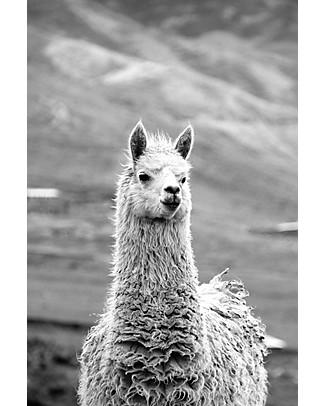 Esencia Collar Condo with Ladybug, Dove – 100% alpaca wool Scarves And Shawls