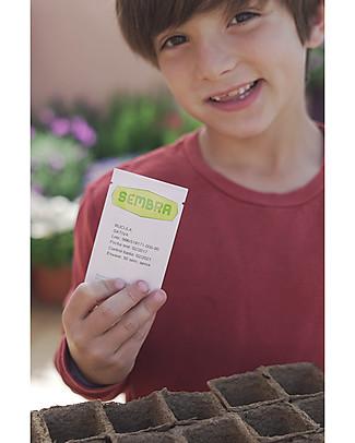 Sembra Hortus Mini Kit Basil - Plant, grow, pick your plant! Science and Nature