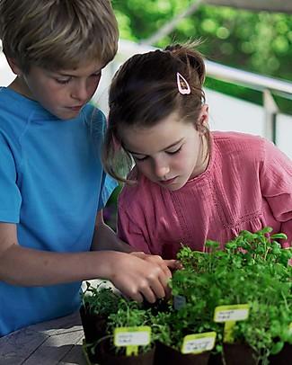 Sembra Hortus Mini Kit Corn Salad - Plant, grow, pick your plant! Science and Nature