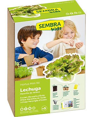 Sembra Hortus Mini Lettuce Summer Marvel - Plant, grow, pick your plant! Science and Nature