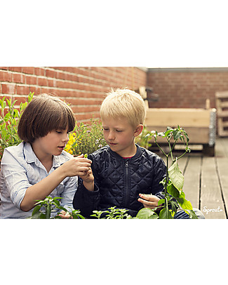 Sprout Plantable Pencil 100% Sustainable - Sage Colouring Activities