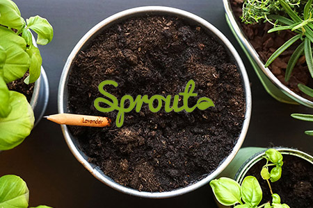 Sale Sprout online